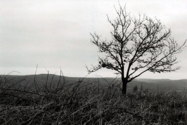 Lone Tree 50mm Fomapan Classic 100 f4 60th sec