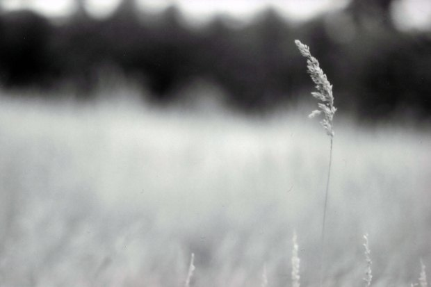 Grass135mm Fomapan Classic 100 f3
