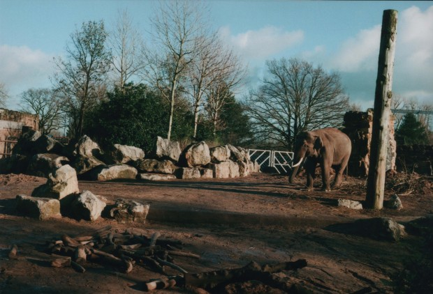 Chester Zoo 1 Agfa Vista Plus 200.jpg