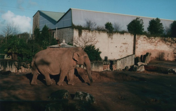 Chester Zoo 2 Agfa Vista Plus 200.jpg