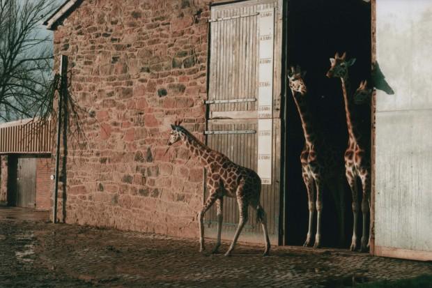 Chester Zoo 10 Agfa Vista Plus 200.jpg