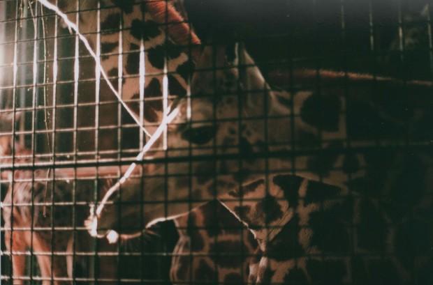 Chester Zoo 12 Agfa Vista Plus 200.jpg