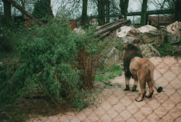 Chester Zoo 18 Agfa Vista Plus 200.jpg