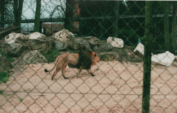 Chester Zoo 19 Agfa Vista Plus 200.jpg