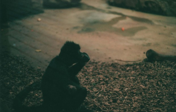 Chester Zoo 22 Agfa Vista Plus 200.jpg