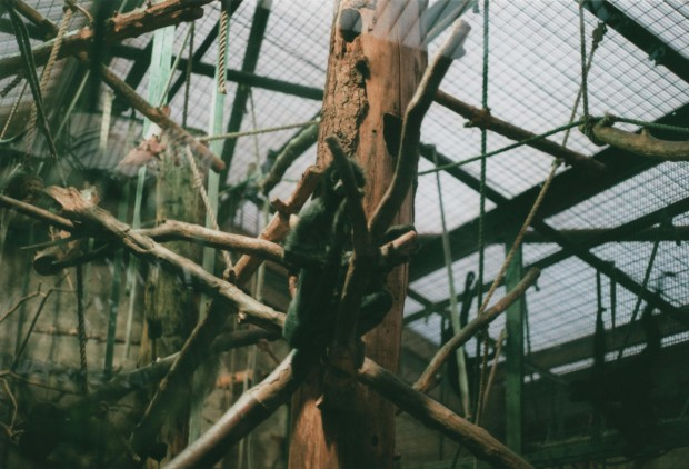 Chester Zoo 23 Agfa Vista Plus 200.jpg