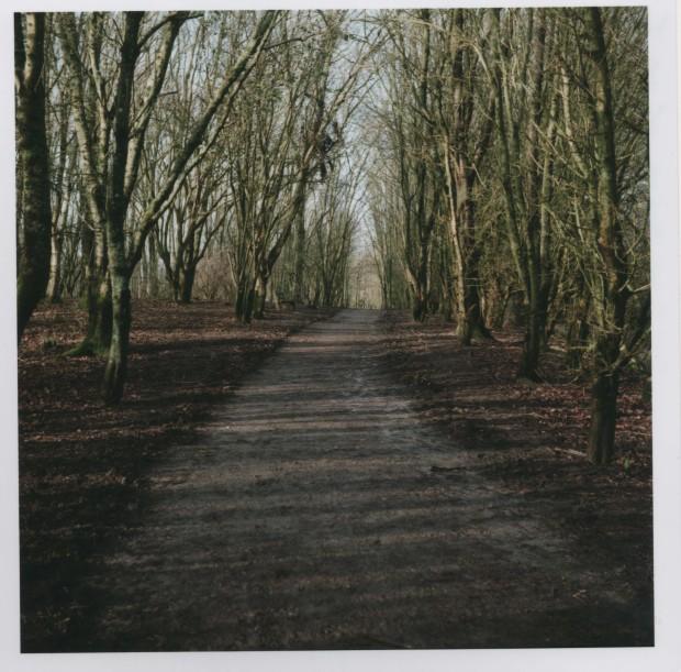 Woodland Path F8 250th sec.jpg