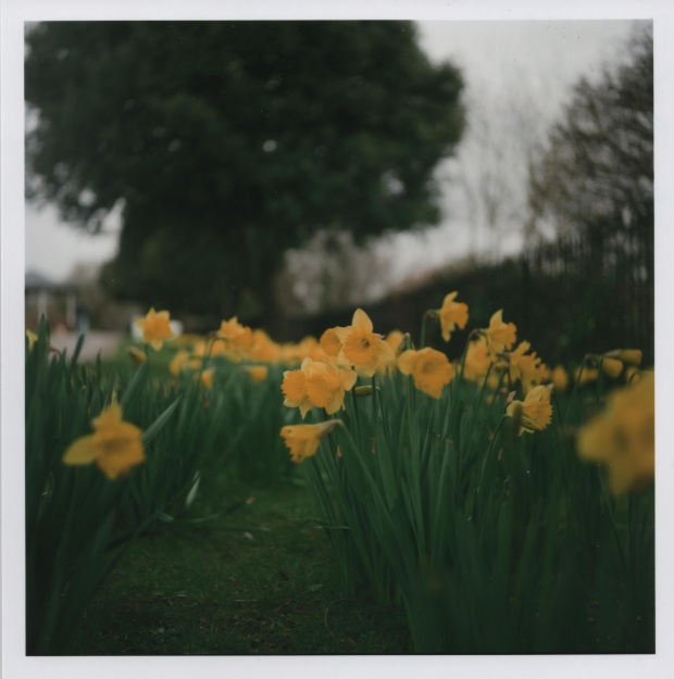 Daffodils f4 125th sec.jpg