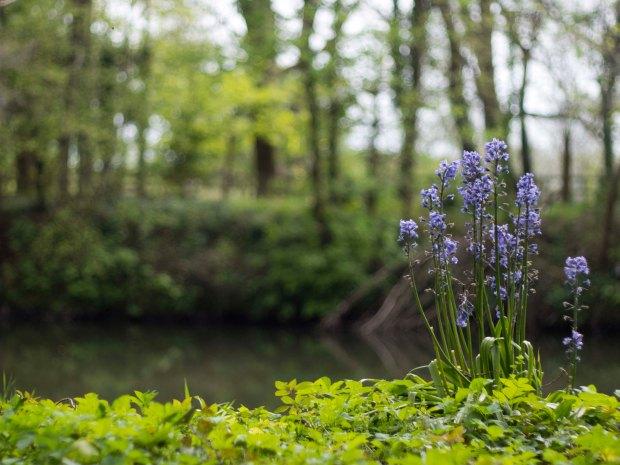 Flowers 50mm.jpg