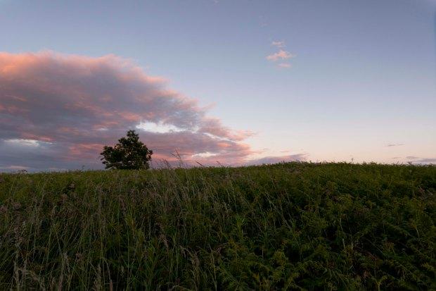 Week 26 Landscape Simplistic.jpg