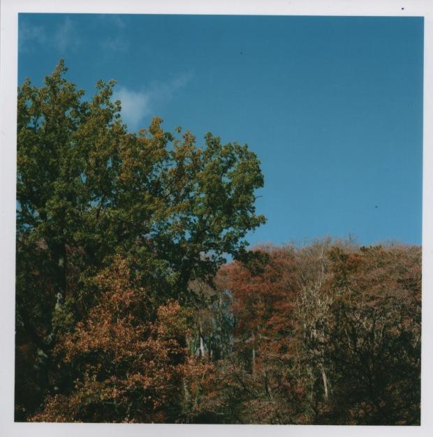Trees f16 125th sec.jpg