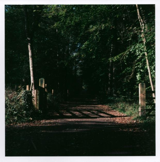 Forest Path f16 125th sec.jpg