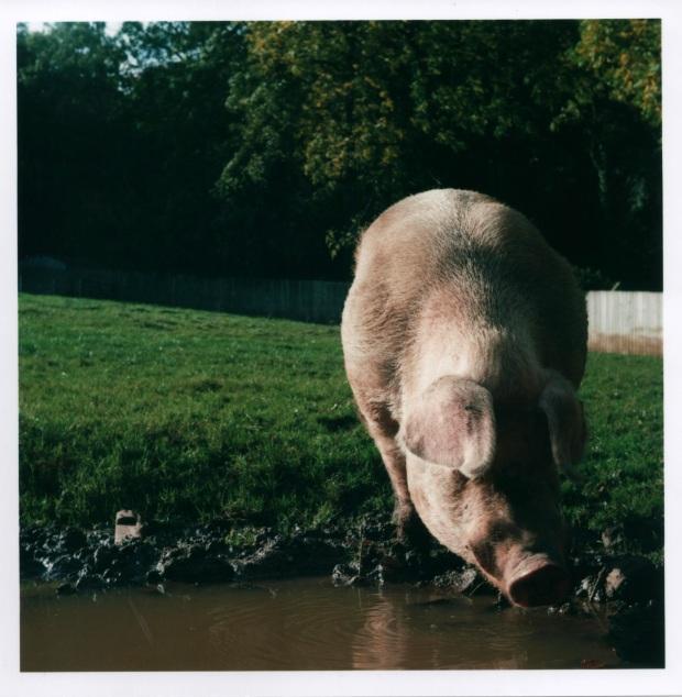 Pig f16 125th sec.jpg