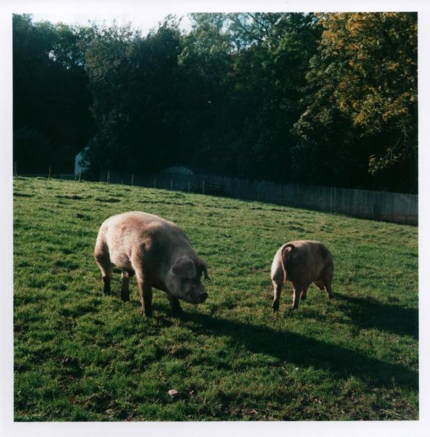 Pigs f16 125th sec.jpg