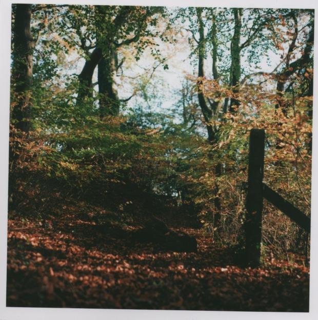 Woodland Path f4 125th.jpg
