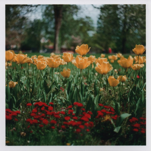 Flowers f2.8 1000th sec.jpg